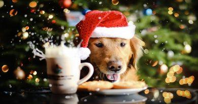 dog_new_year_drink_food_hat_spray_72210_3840x2400