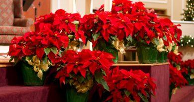 tbc-christmas-decorations-08