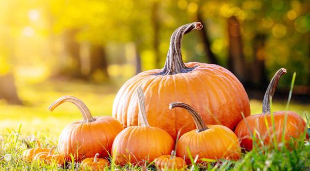 pumpkin.thumb